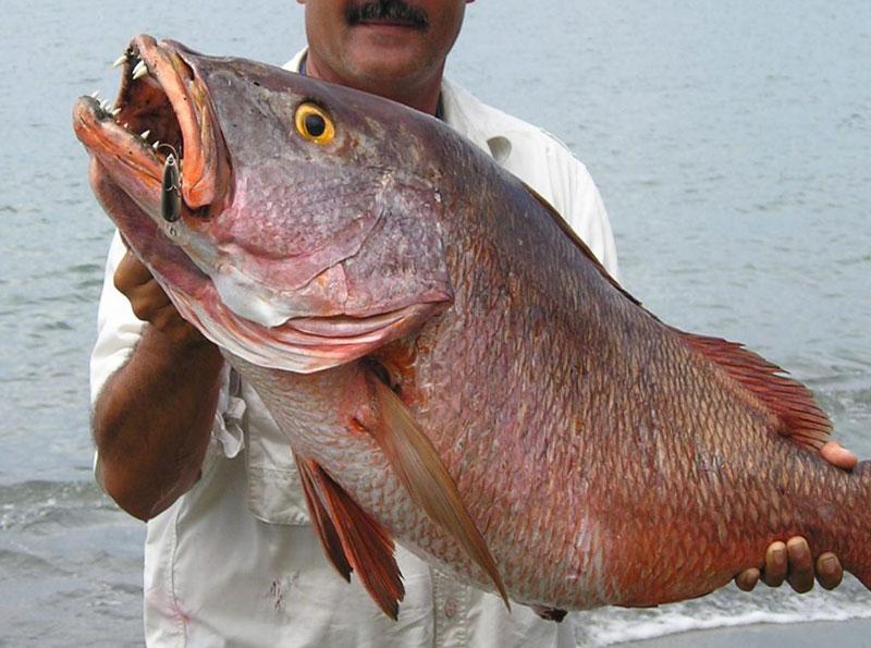 Receta- filete de pescado empapelado estilo sinaloa