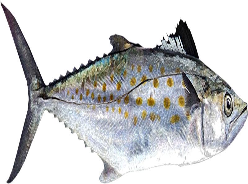 Pescado-basa-