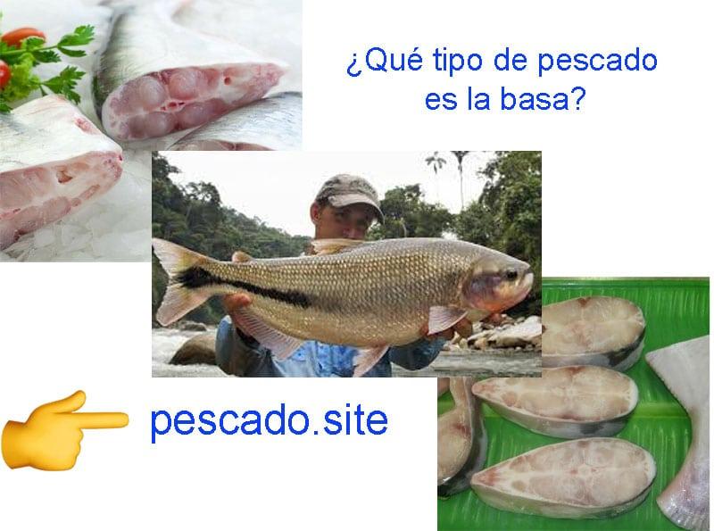 Qué-tipo-de-pescado-es-la-basa